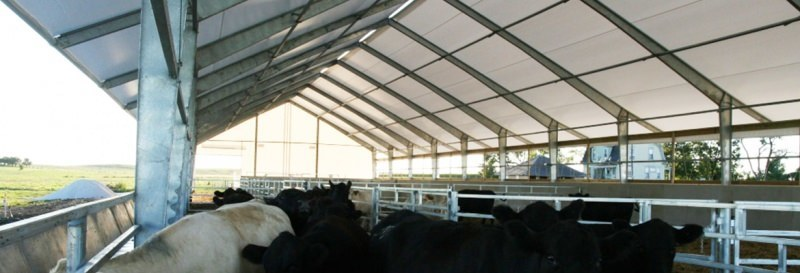 Cattle-beef-feedlot-fabric-building_Canada