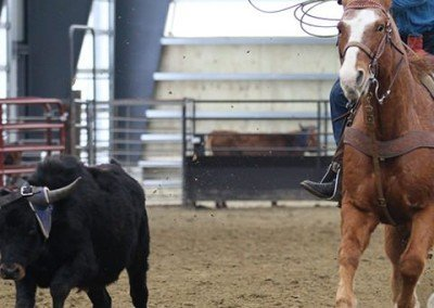 calf-roping-rodeo-equiestrian-fabric-building_Canada