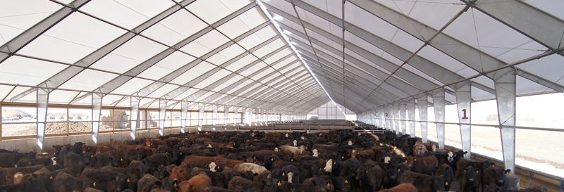 fabric-cattle-beef-building_Canada