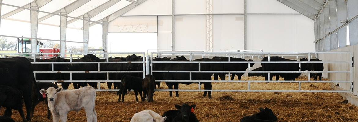 fabric structure beef cattle ventilation